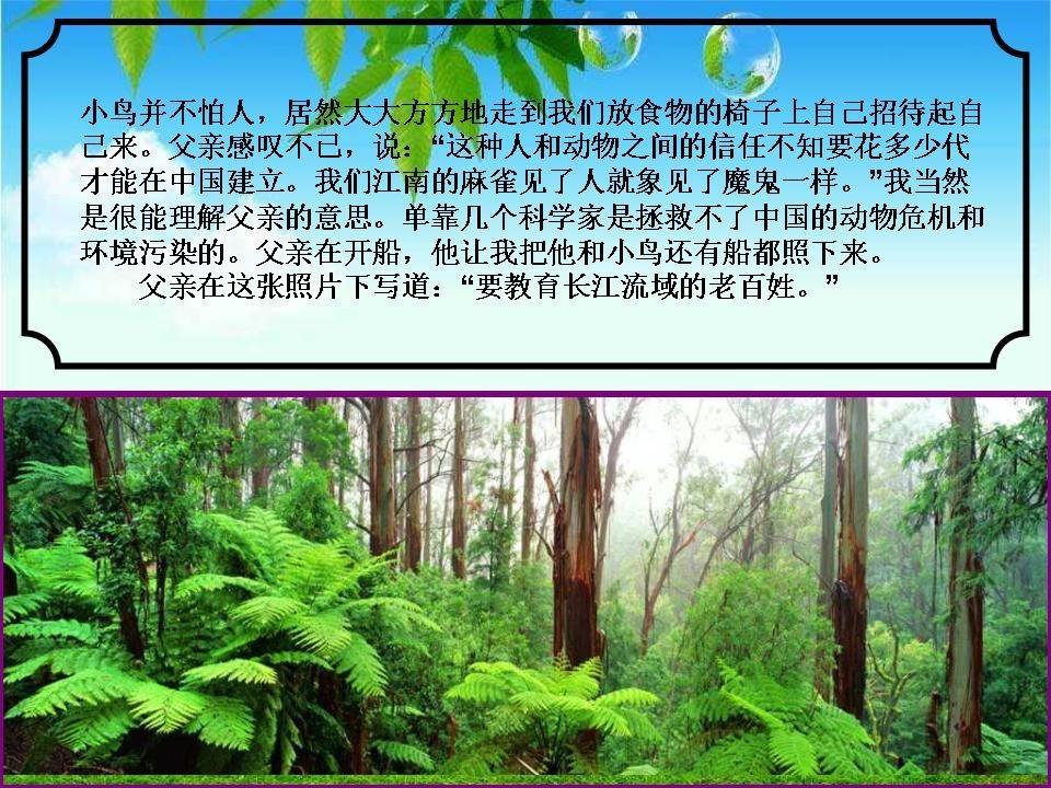 wuchuanmi_yangtze_river_fish_protector_22
