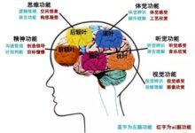 【整理】人体的大脑和小脑的分区和功能及作用
